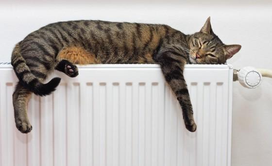Radiator and Cat